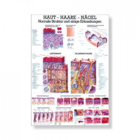 'Haut - Haare - Nägel Mini Poster 24 x 34 cm'