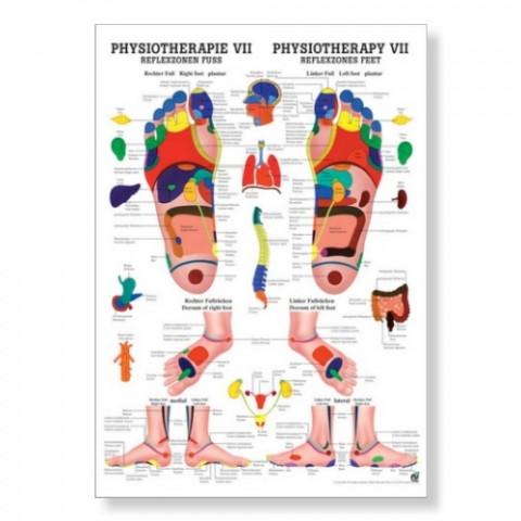 'Reflexzonen Fuss Poster 50 x 70 cm'