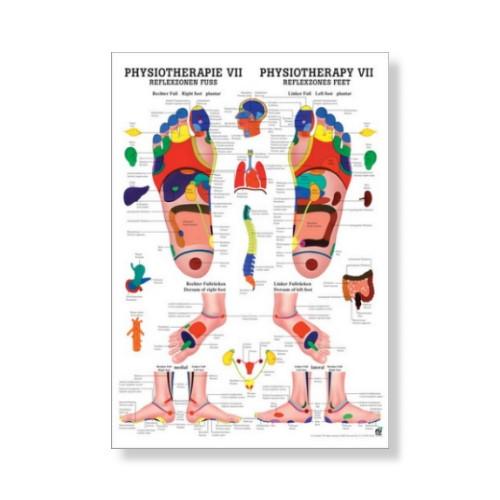 Reflexzonen Fuss Mini Poster 24 x 34 cm